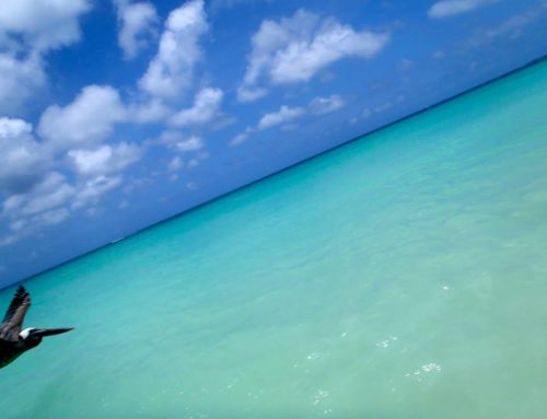 Everything That I Love About Aruba